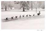 Make Way for Ducklings in Boston's Public Garden SDSS 1106
