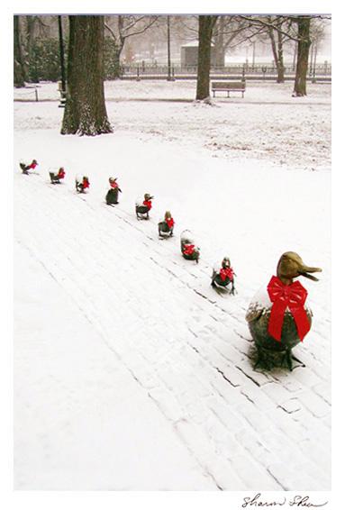 Mrs. Mallard and her Eight Ducklings Boston Public Gardens CCNE 1004