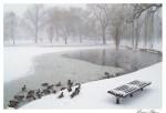 Ducks in the Boston Public Garden SDSS 0803