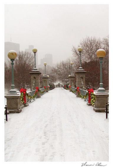 Swan Lake Bridge Boston Public Gardens Boston, MA  CCNE 1010