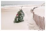 Christmas Tree New England Beach SDSS 0801