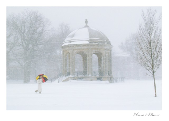 Town Common Gazebo Umbrella in the Snow SDSS 1105