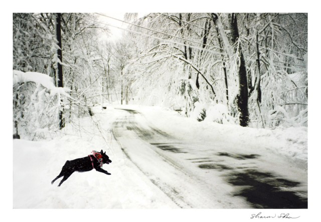 Dog on Snowy Road
