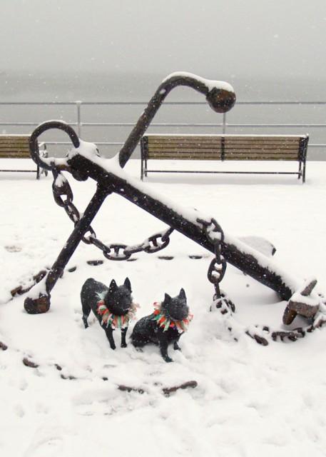 Dogs at Anchor SDSS 1209