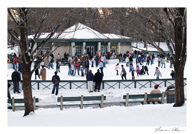 Frog Pond Skating
